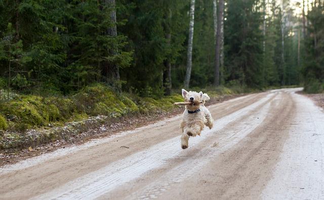 יום כיף לכלב